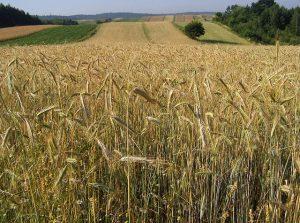 rolnictwo w województwie dolnośląskim
